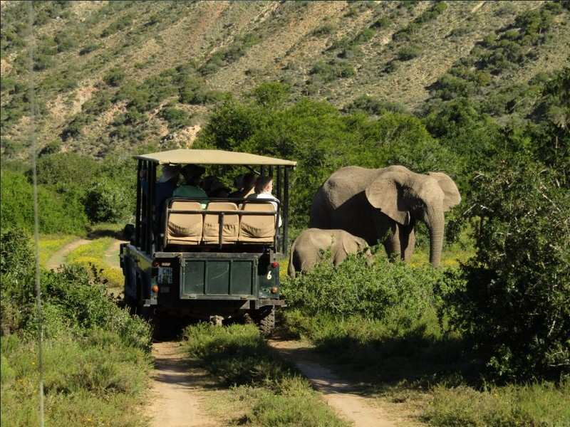 Agr Elephants Game Drive