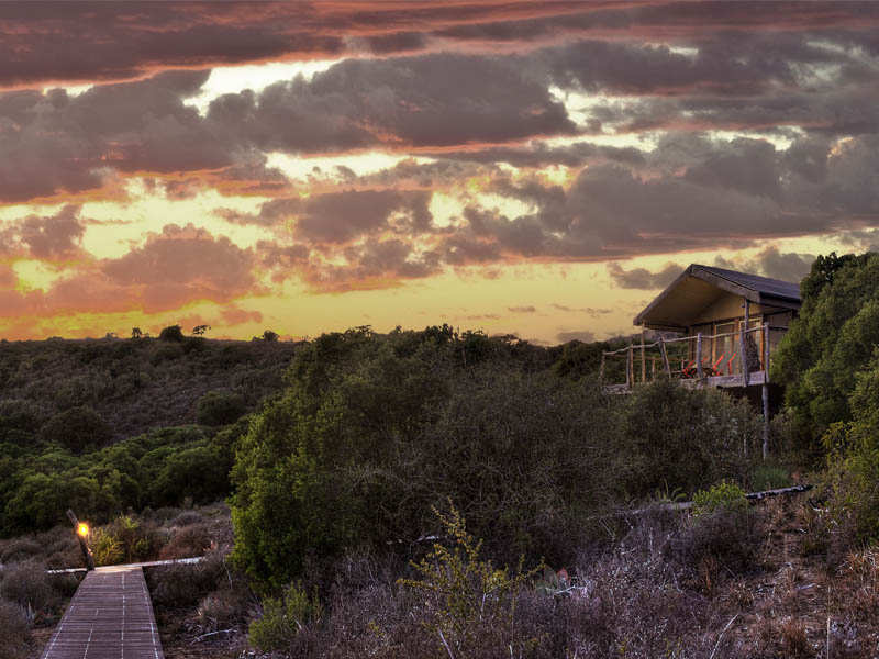 Amakhala Game Reserve Hillsnek Outside View