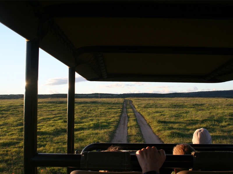 Amakhala Game Reserve Safari Drives Family Friendly