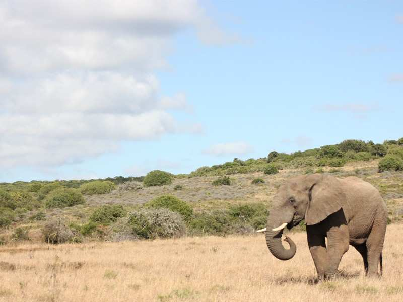 Greater Addo Port Elizabeth Accommodation Amakhala Game Reserve Elephant Safari