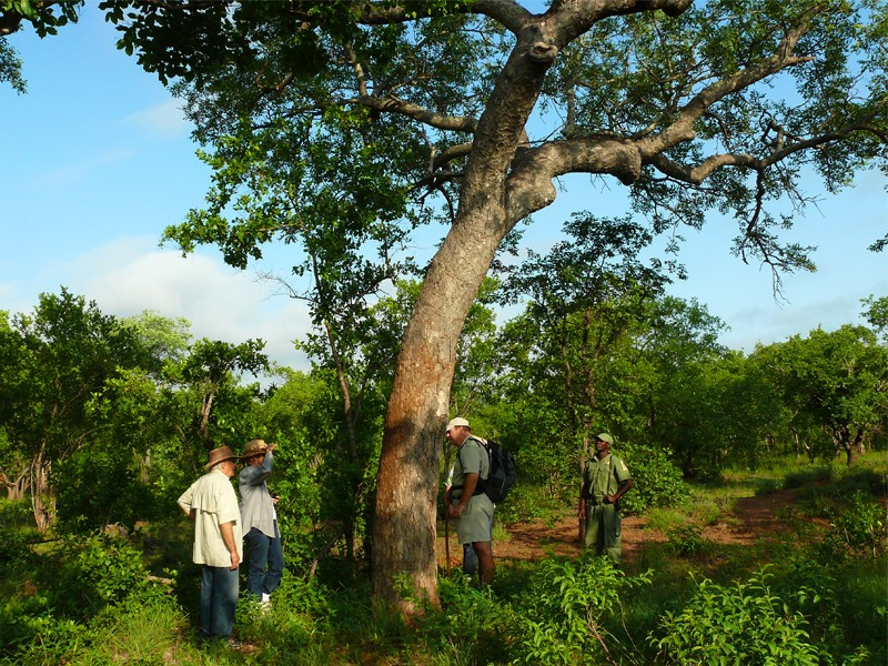 Mozambique Accommodation Great Limpopo National Park Machampane Wilderness Camp Guided Walks