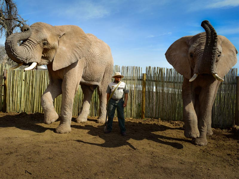 Cape Hotels The Unique A&E Portfolio Buffelsdrift Game Lodge Oudtshoorn Elephants And Ranger