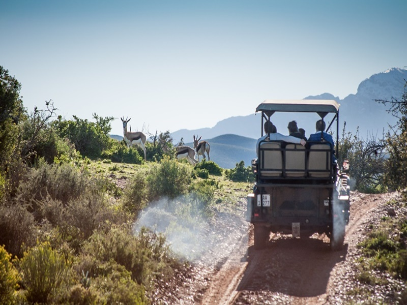 Buffelsdrift Game Lodge Accommodation In Oudtshoorn Bush Safari Game Vehicle 23