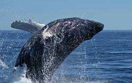 South Africa Tour Cape Town Garden Route Whale Route Watching Plettenberg Bay